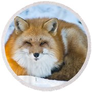 Red Fox Pictures 98 Round Beach Towel