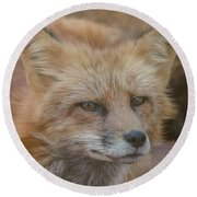 Red Fox Portrait Round Beach Towel