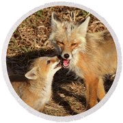 Red Fox Vixen With Pup On Hecla Island In Manitoba Round Beach Towel