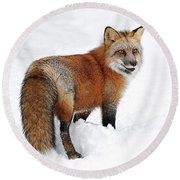 Red Fox Winter Round Beach Towel