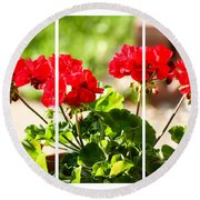 Red Geraniums Triptych Round Beach Towel