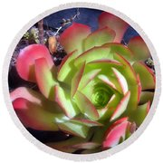 Red Green Succulent Round Beach Towel
