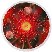 Red Gum Flower Macro Round Beach Towel