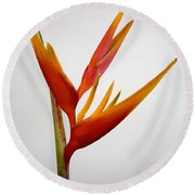 Red Heliconia Round Beach Towel