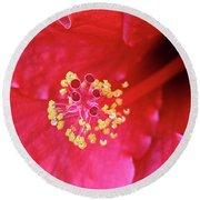 Red Hibiscus 3 Round Beach Towel