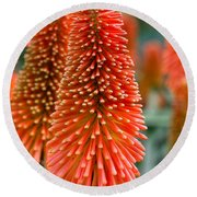 Red-hot Poker Flower Kniphofia Round Beach Towel
