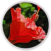 Red Hyacinth At Pilgrim Place In Claremont-california Round Beach Towel