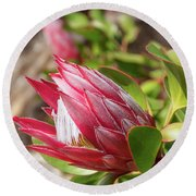 Red King Protea Bud Round Beach Towel