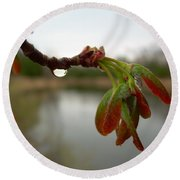 Red Maple Seed Pods At Dawn Round Beach Towel
