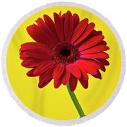 Red Mum Against Yellow Background Round Beach Towel