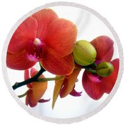 Red Orchid Flowers 02 Round Beach Towel