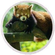 Red Panda Ailurus Fulgens Jerez De La Frontera Spain Round Beach Towel