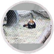 Red Panda Cub Round Beach Towel