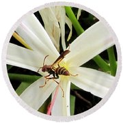 Red Paper Wasp And Spider Lily 000 Round Beach Towel