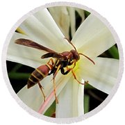 Red Paper Wasp And Spider Lily 001 Round Beach Towel