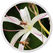 Red Paper Wasps And Spider Lily Round Beach Towel