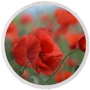 Red Poppies Blooming Round Beach Towel
