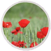Red Poppy Flower And Green Wheat Nature Spring Scene Round Beach Towel