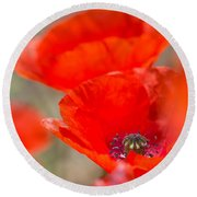 Red Poppy For Remembrance Round Beach Towel