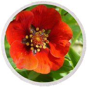 Red Red Bloom Round Beach Towel