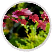 Red Red Maple Leaves Round Beach Towel