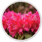 Red Rhododendron Flowers At Floriade, Canberra, Australia. Round Beach Towel