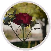 Red Rose 1 Round Beach Towel