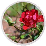 Red Rose And Buds Round Beach Towel