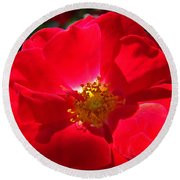 Red Rose Art Print Sunlit Roses Botanical Giclee Baslee Troutman Round Beach Towel