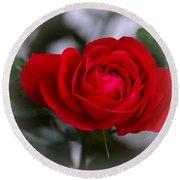 Red Rose Round Beach Towel by Issabild -