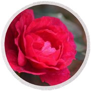 Red Rose Of May Round Beach Towel