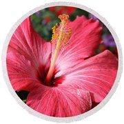 Red Rose Of Sharon  Round Beach Towel