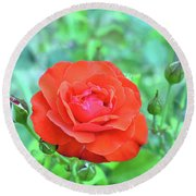Red Rose On Natural Background With Green Leaves. Round Beach Towel