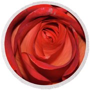 Red Rose Up Close Round Beach Towel