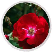 Red Rose With Buds Round Beach Towel