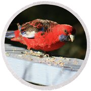 Red Rosella Round Beach Towel