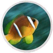 Red Sea Clownfish  Round Beach Towel