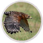 Red-shouldered Hawk Flight Round Beach Towel