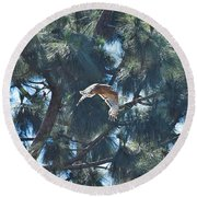 Red Shouldered Hawk Flying Away 1 Round Beach Towel