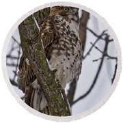 Red Shouldered Hawk - Madison - Wisconsin Round Beach Towel