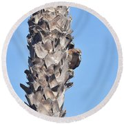 Red Shouldered Hawk On Palm Tree Round Beach Towel