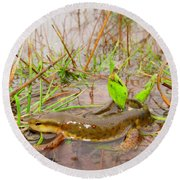 Red Spotted Newt Round Beach Towel
