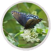 Red-spotted Purple Butterfly On Privet Flowers Round Beach Towel