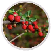 Red Spring Buds Round Beach Towel