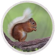 Red Squirrel Curved Log Round Beach Towel