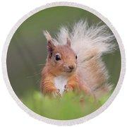 Red Squirrel In Vegetation Round Beach Towel