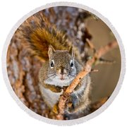 Red Squirrel Pictures 144 Round Beach Towel