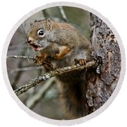 Red Squirrel Pictures 161 Round Beach Towel