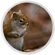 Red Squirrel Pictures 170 Round Beach Towel