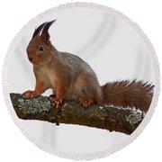 Red Squirrel Transparent Round Beach Towel